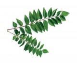Curry Leaves - कड़ीपत्ता